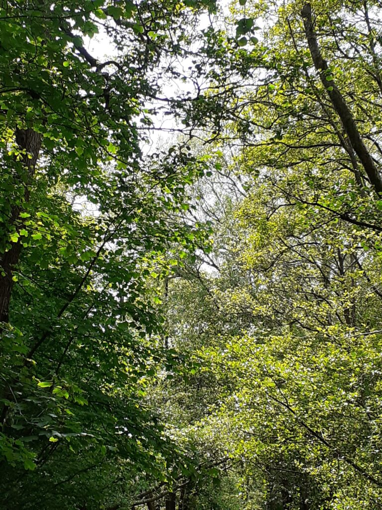 Looking up into canopy of trees and branches.
